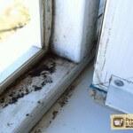 Как избавиться от плесени на окнах? Проверенные средства